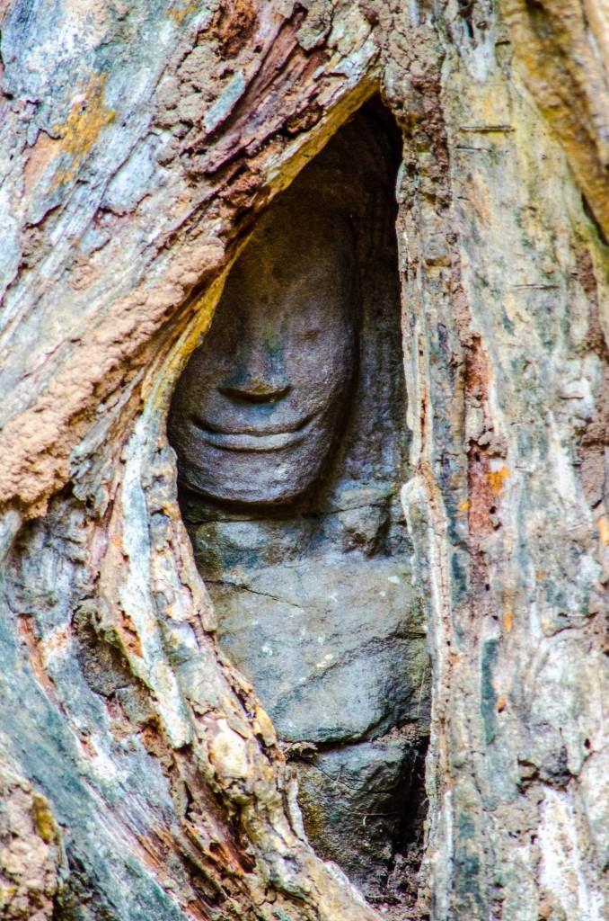 Каменное улыбающееся лицо, поглощенное деревом Сием Рип, Камбоджа. Древние храмы Ангкор