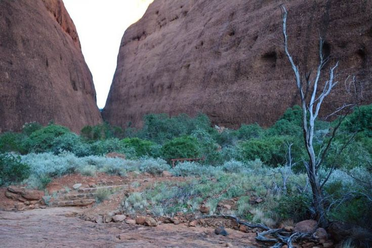 Eine grüne Oase, Walpa Gorge, Australien (scheduled via http://www.tailwindapp.com?utm_source=pinterest&utm_medium=twpin)