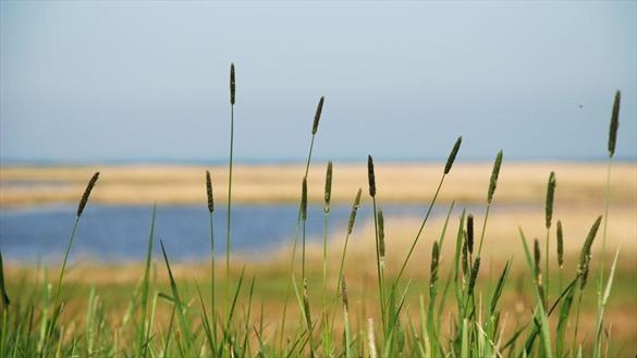 Geddal Beach Meadows - Holstebro, Denmark