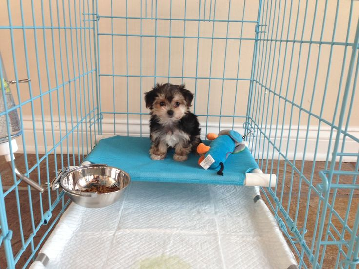 Great for all small dog breeds potty training puppies