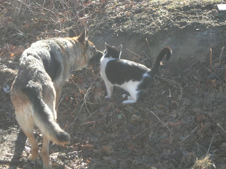 Justo eso. El perro y el gato. El Espinar (Segovia). 2009.