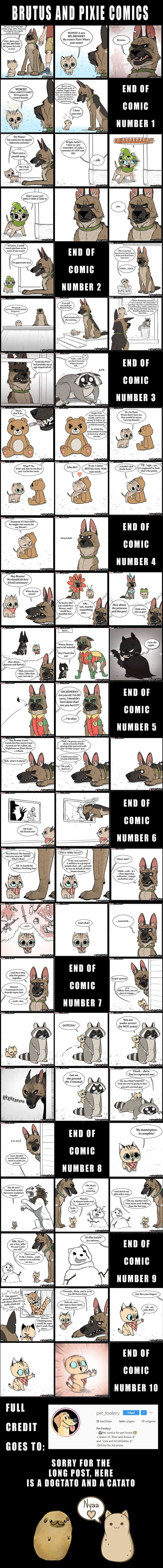 Brutus and Pixie all comics (all credit to Pet_Foolery in Instagram). Since many 9gaggers don't seem to have Instagram I thought it would be a good idea to turn all these comics into one picture. – Travis Brownlee – travisb12