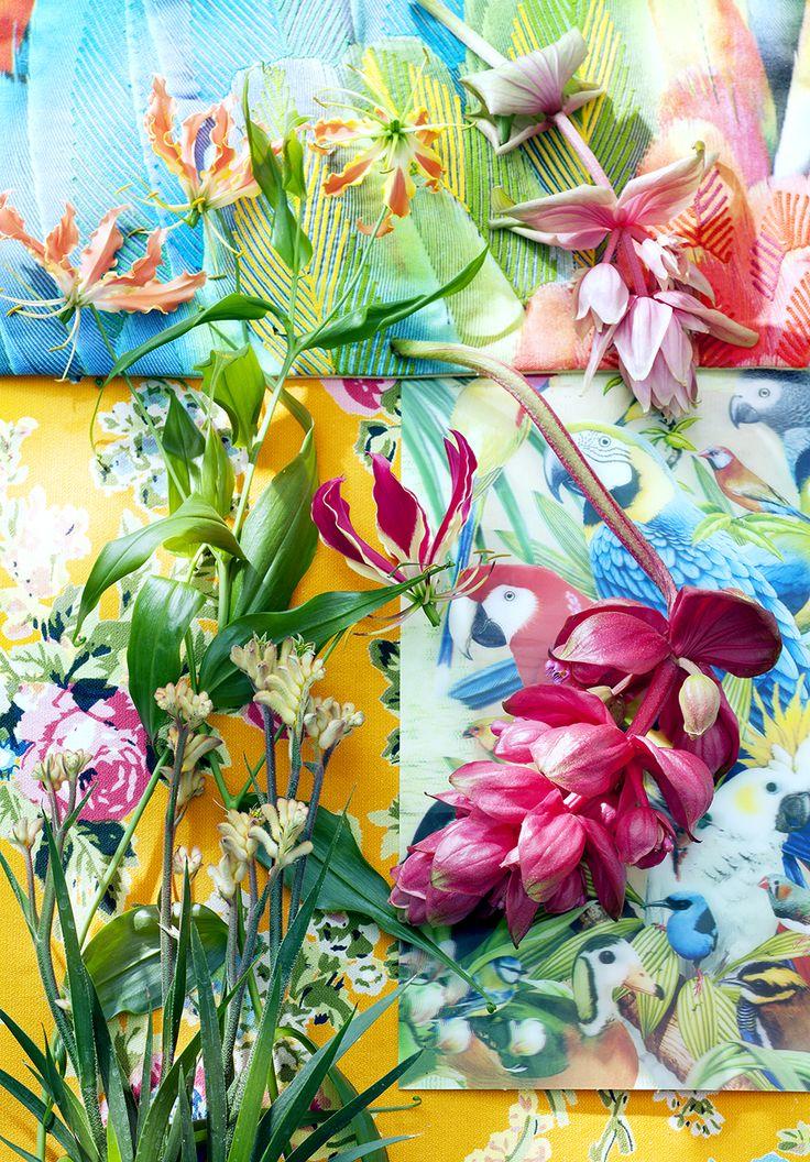 Die besten 25+ tropische Zimmerpflanzen Ideen auf Pinterest - tropische pflanzen im garten
