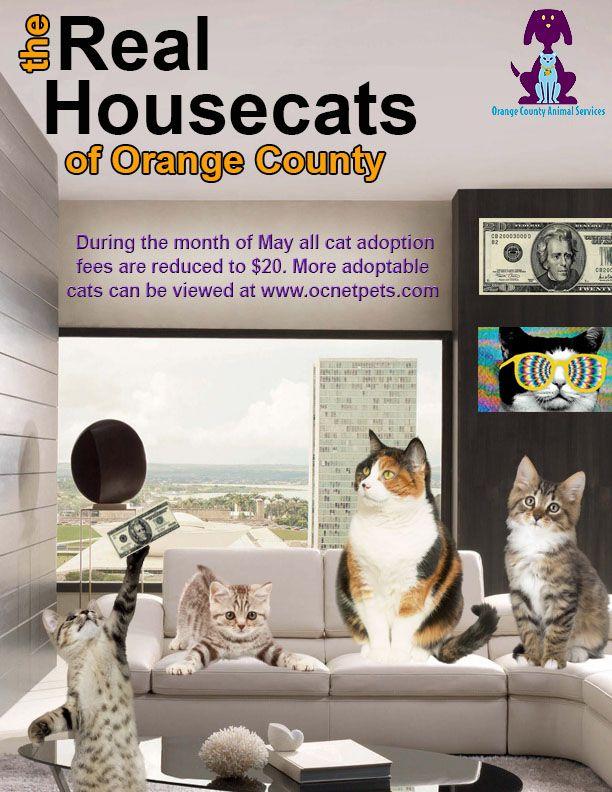 Animal Shelter Adoption Promotion Ideas Animal Shelter Adoption