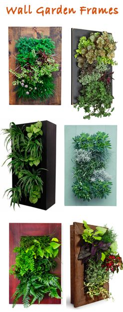 wall frames for vertical gardening - easy way to bring a bit of nature inside
