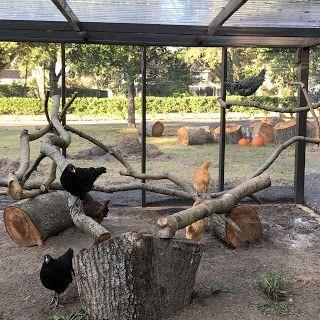 COOP HEAVEN: Perch Gym, branch perches, wooden chicken perches
