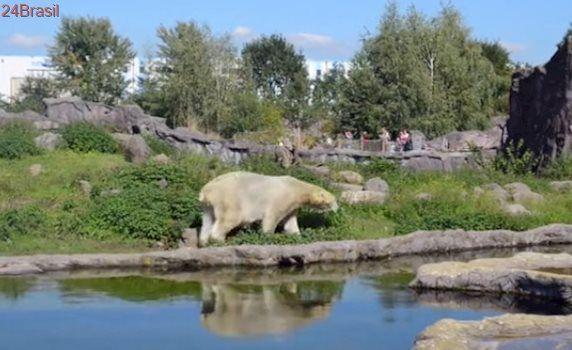 Fotógrafo documenta a angústia dos ursos polares confinados em zoos