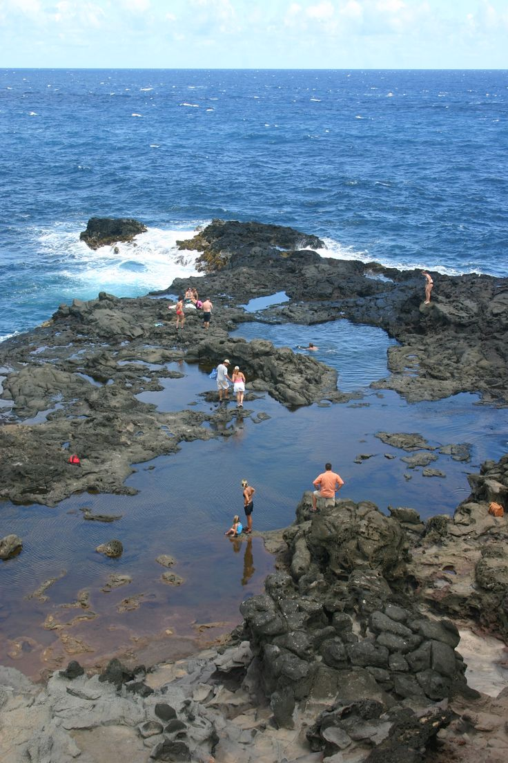 Olivine Tide Pool in Maui...awesome little discovery!
