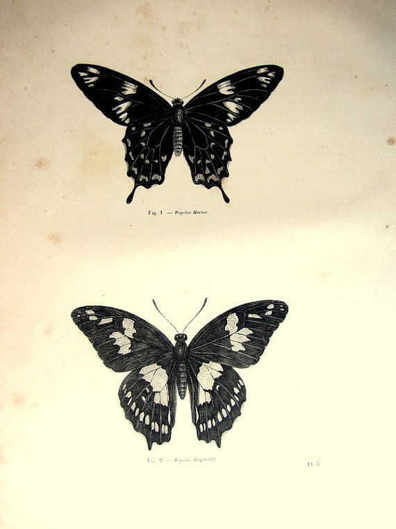 1860 Antique nice butterflies print vintage by LyraNebulaPrints, $24.95