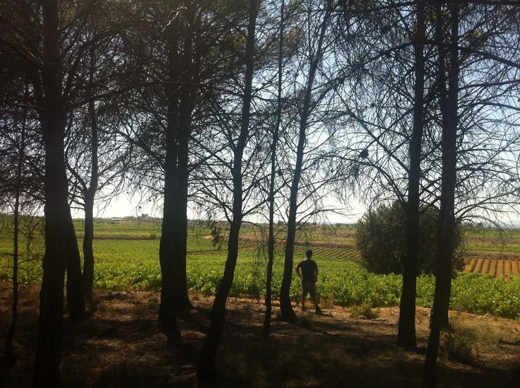 mirando las viñas