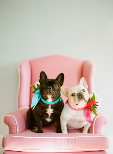 Cute wedding dogs with colorful collars.