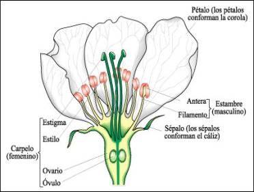 Pin De Monse Bringas En P Botanica Flor Completa Planta De Maiz Plantas