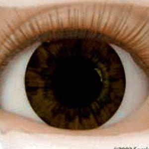 Real Brand Eyes-Chocolate Brown