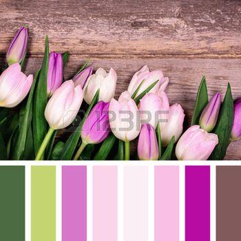 Un gros plan de tulipes roses et pourpres sur fond vieux bois, dans une palette de couleurs avec des �chantillons de couleurs gratuits photo