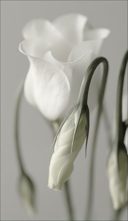 kkk #flower