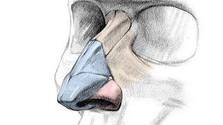 Anatomy tutorials from Stan Prokopenko