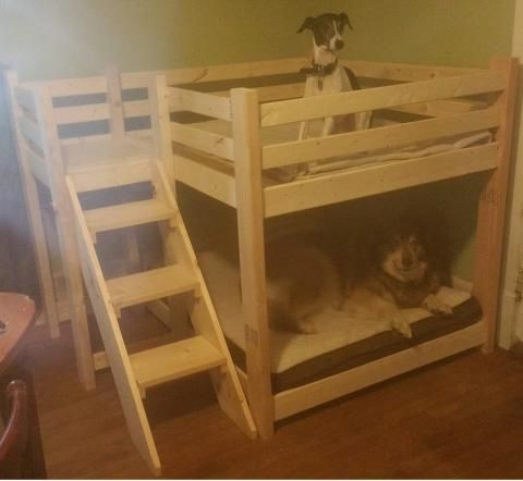 Dog Bunk Bed!! Yes please!!