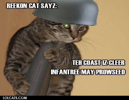 army cat