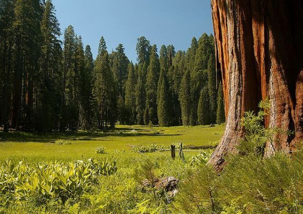 Photo by Jerry Ting - Giant Sequoia National Monument, CA: Giant Sequoia, National Monuments, Sequoia National, Photo, Sequoia Crescentmeadow