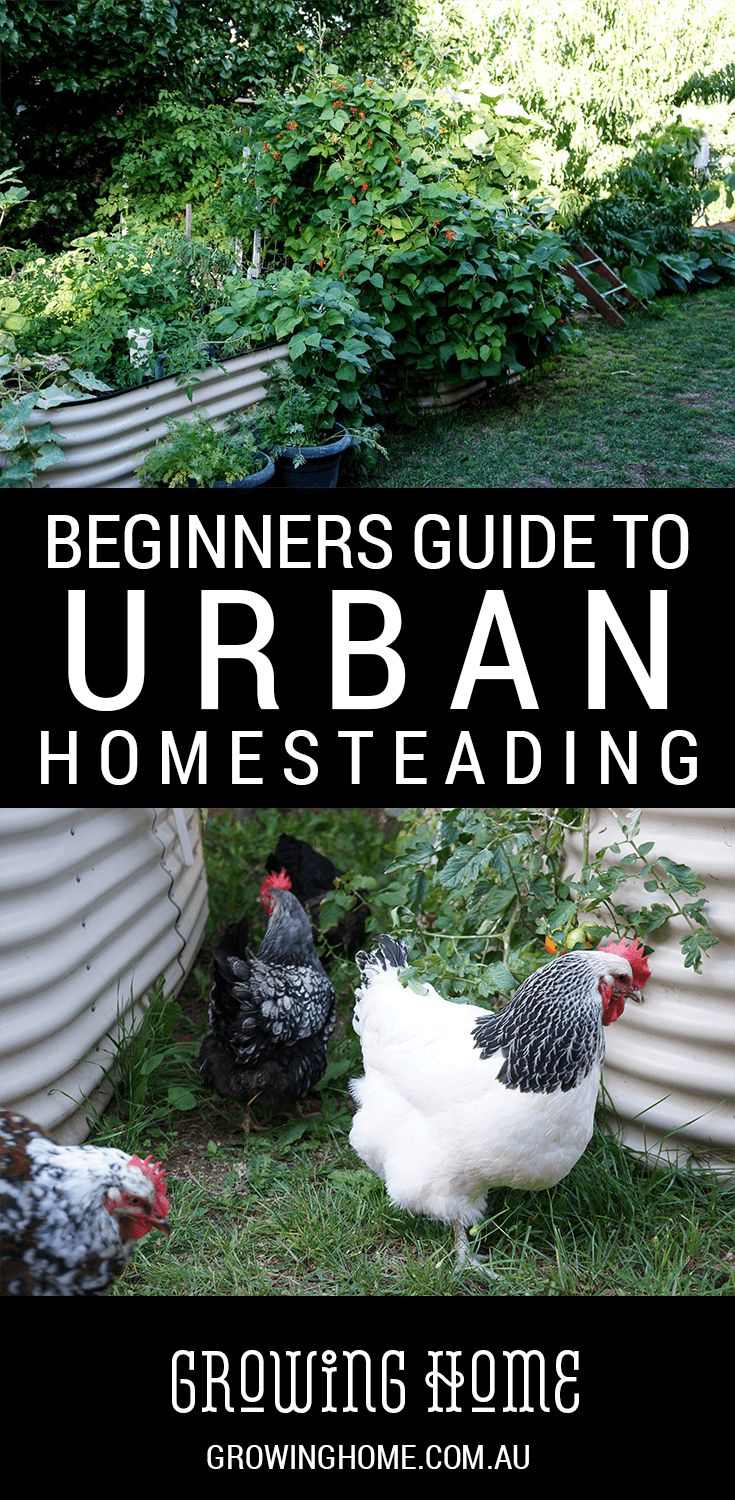 This Beginners Guide to Urban Homesteading can help you answer some of your questions about growing, raising, cooking and preserving real food!