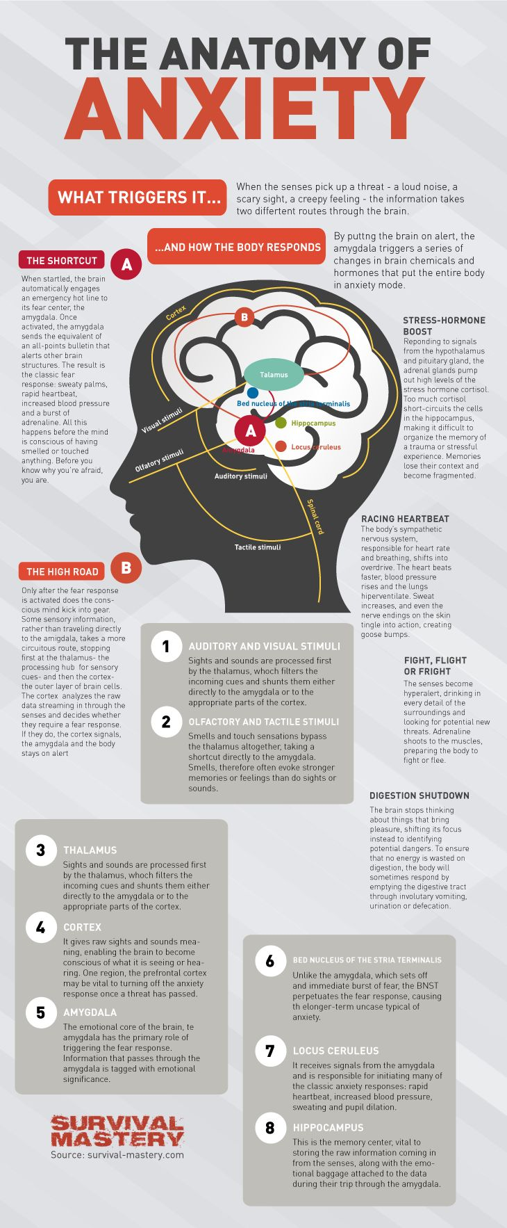 The anatomy of anxiety.  I think that for those who suffer with anxiety, knowing that it is a autonomous reaction is comforting.  Once you realize why you are reacting with anxiety it's easier to jump right in to retraining your response and calming that fight or flight chemical release