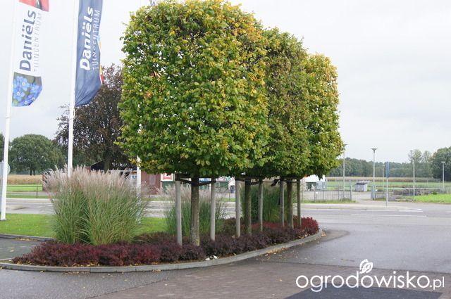 Ogród niby nowoczesny ale... - strona 450 - Forum ogrodnicze - Ogrodowisko