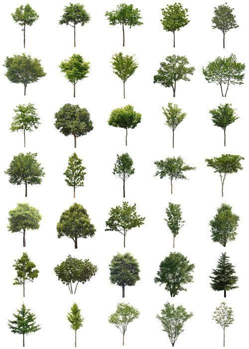 大木の樹木素材 | Rendering | Tree photoshop, Landscape, Revit trees