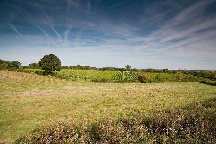 British supermarket Waitrose broke the news that English wines are making a fierce rise in the U.K.'s wine market... http://www.snooth.com/articles/all-hail-the-united-kingdom-of-wine-sales-up-177-percent/