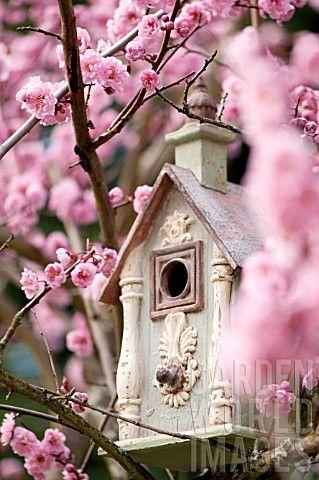 birdhouse amidst flowering plum blossoms