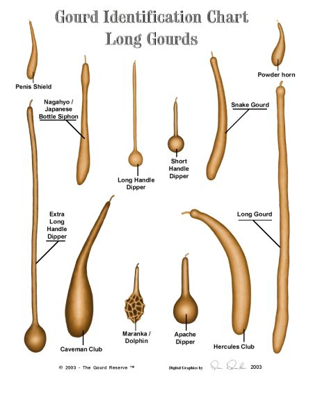 What are Gourds and How To Use Them for Arts and Crafts