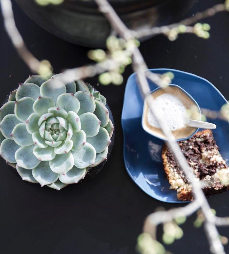 """190 Synes godt om, 1 kommentarer – Design Nest CPH (@designnestcph) på Instagram: """"Macchiato time... from above... #kaffepause #espresso #forårsgrene #succulent #kage planter…"""""""