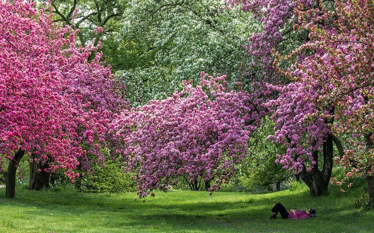 April in New York: Visit the NY Botanical Garden in Bloom: Gardenista