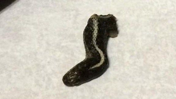 Woman claims to find a snake head in can of green beans http://ift.tt/1LzhDwa  An Oregon food distribution company has halted some shipments of canned green beans after a Utah woman said she found a severed snake head in a can.  The unsettling discovery was made Wednesday night at a Mormon church in Farmington Utah while women and youth were preparing a meal for older members of the congregation.  Troy Walker said she was taking beans out of a slow cooker when she spotted something odd…