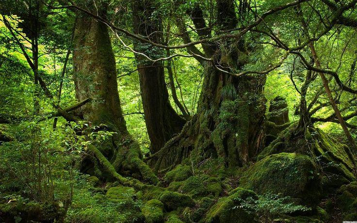HD-Nature-Woods-6.jpg (1280×800)