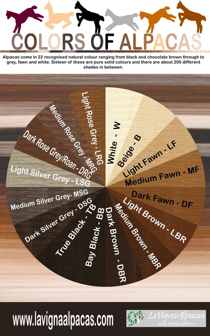 """Alpaca Colour chart. Repinned by Elizabeth VanBuskirk, author of the new book """"Beyond the Stones of Machu Picchu,"""" a collection of short stories and myths about Inca life   """" (Thrums Books, Colorado 12/13) <http://www.amazon.com/Beyond-Stones-Machu-Picchu-Stories/dp/0983886059"""