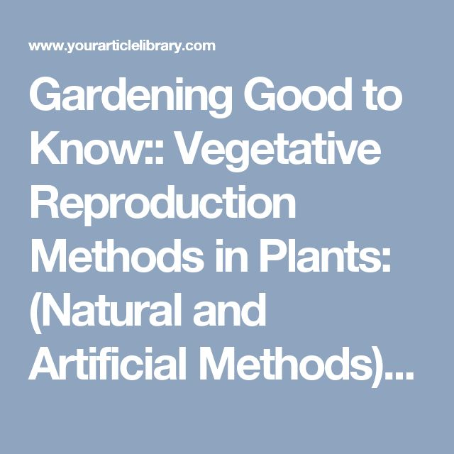 Gardening Good to Know:: Vegetative Reproduction Methods in Plants: (Natural and Artificial Methods) | Plants