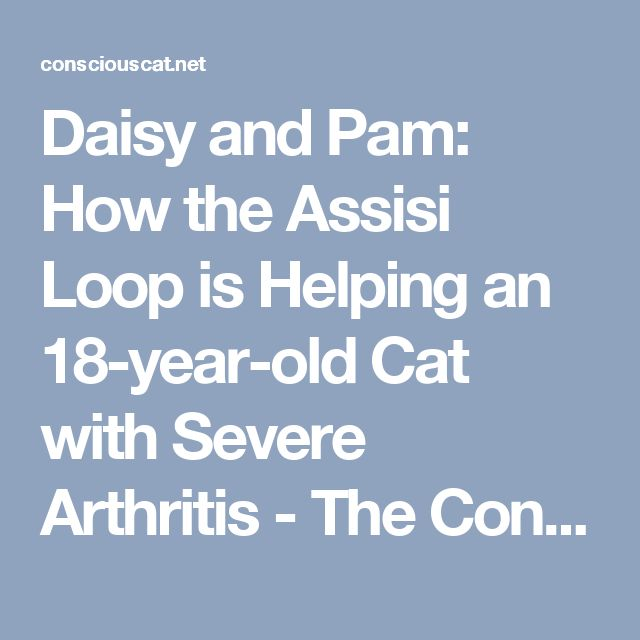 Daisy and Pam: How the Assisi Loop is Helping an 18-year-old Cat with Severe Arthritis - The Conscious Cat
