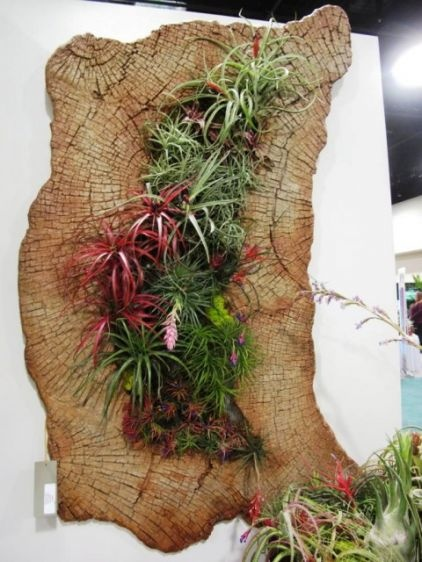 78 images about air plant display ideas on pinterest gardens flora and air plant terrarium. Black Bedroom Furniture Sets. Home Design Ideas