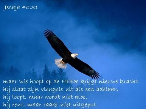 Maar wie hoopt op de Heer krijgt nieuwe kracht www.relicards.nl