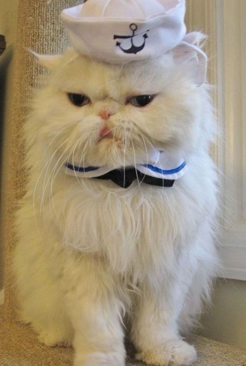 PICTURES: Cats and dogs dressed in adorable outfits for National Dress Up Your Pet Day   Weird   News   Daily Express