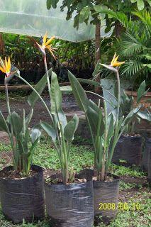 A continuación encontraras una serie de plantas que puedes tener a pleno sol, como rosas, resucitados, cactus, pinos y algunos bonsai están ...