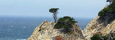 Point Lobos State Natural Reserve