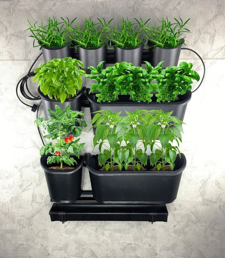 Grow Your Own Organic Vegetables and Fruits With This Urban Farming Vegetable and Fruit Starter Kit