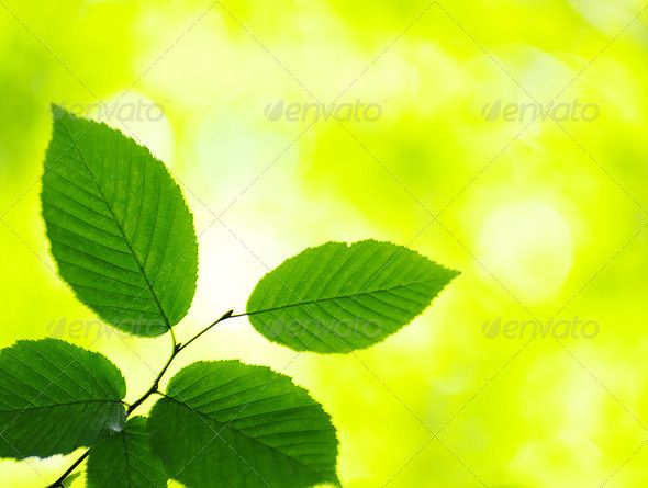 Realistic Graphic DOWNLOAD (.ai, .psd) :: http://hardcast.de/pinterest-itmid-1006684838i.html ... Green leaves ...  background, beauty, bright, foliage, forest, freshness, green, growth, leaf, leaves, nature, outdoors, plant, plants, sunlight, tree, woods  ... Realistic Photo Graphic Print Obejct Business Web Elements Illustration Design Templates ... DOWNLOAD :: http://hardcast.de/pinterest-itmid-1006684838i.html