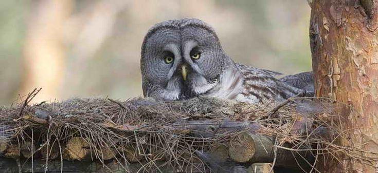 Сегодня в Казахстане отмечают Международный День птиц, по этому случаю в Иле-Алатауском национальном парке пройдут праздничные мероприятия, посвященные дню пернатых. В акимате Алматы