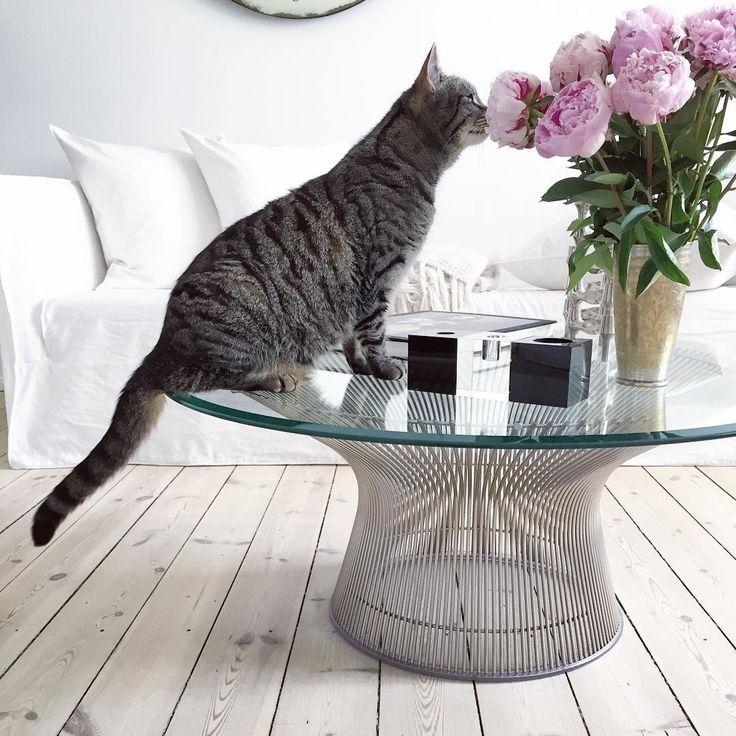 Всем доброго утра и восхитительного настроения! @annikavonholdt #кот #котки #киса #цветы #cat #flowers #livingroom