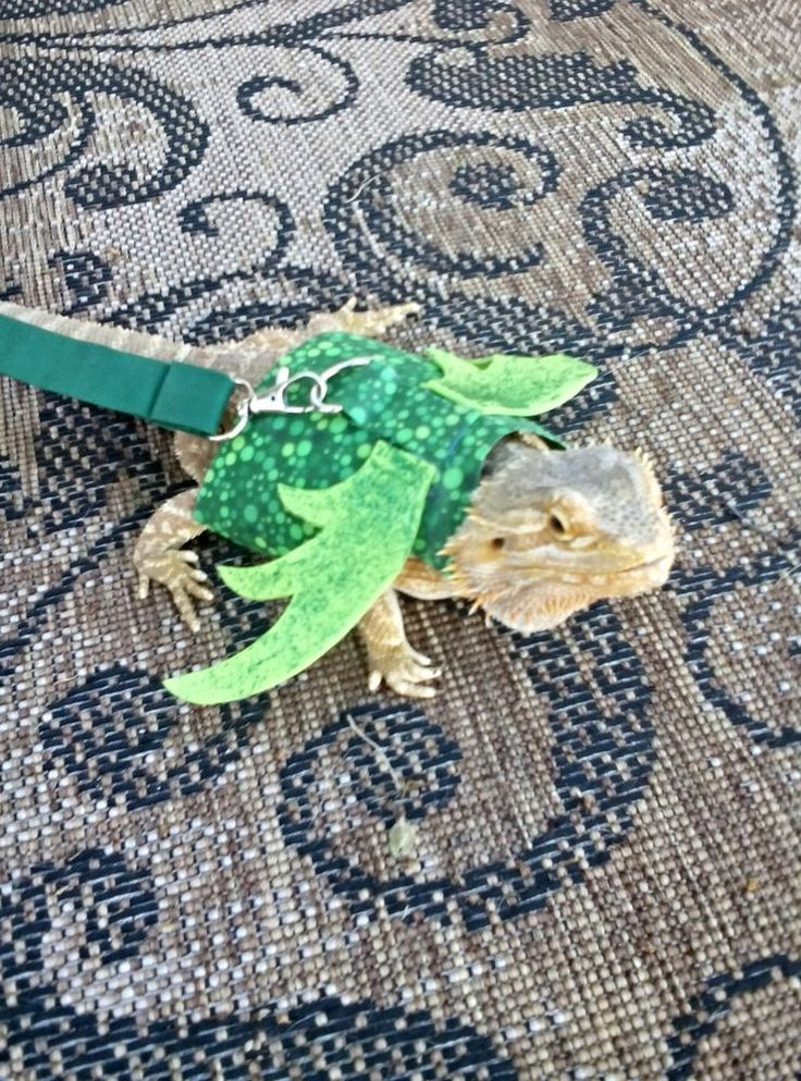 Lil' Bestie Bearded Dragon Harness and Leash Dragon Wings GREEN in Reptile Supplies | eBay