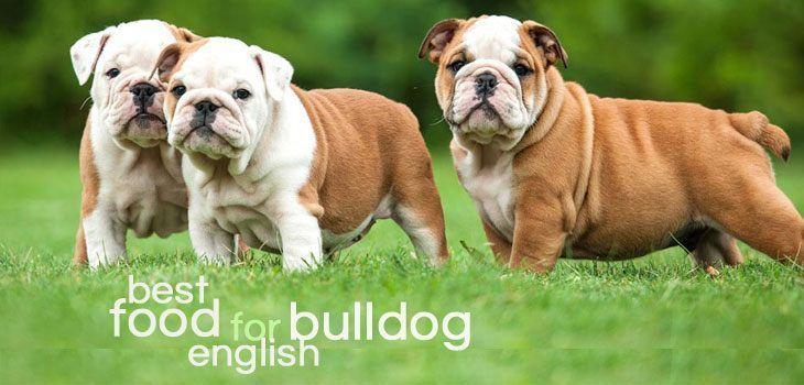 Best Dog Food For English Bulldog In 2020 Bulldog Puppies Bulldog English Bulldog