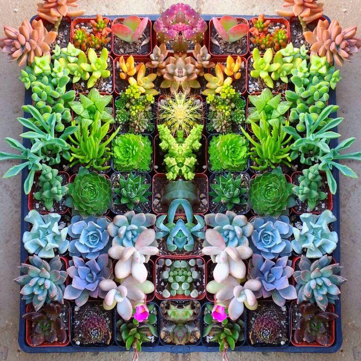 Diy Succulent Potting Mix Australia: DIY: Backyard & Gardening