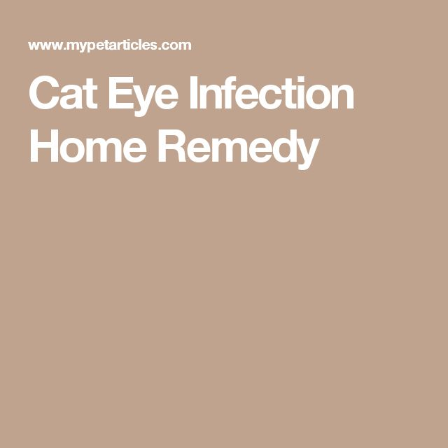 Cat Eye Infection Home Remedy